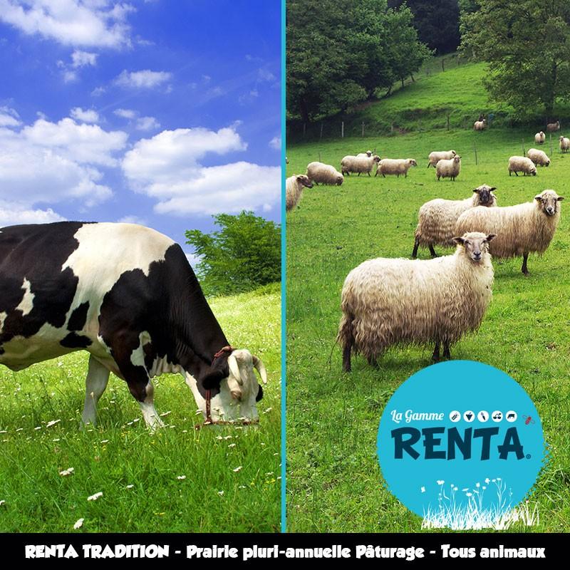 RENTA TRADITION - Prairie Pluriannuelle Pâturage Tous Animaux – 50% de Ray-grass