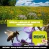 RENTABIO - Mélange Mellifère Annuel Spécial Abeilles et Insectes Pollinisateurs (70/30) **