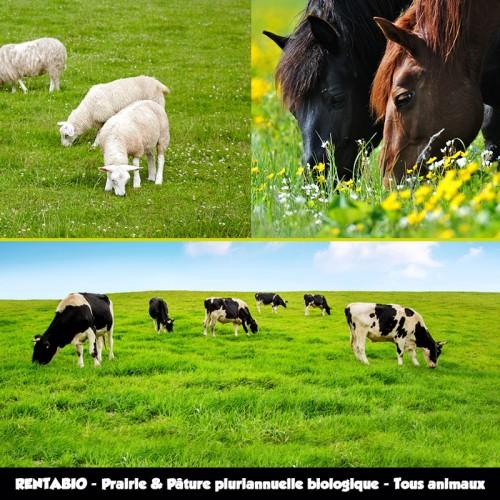 RENTA BIO - Mélange Prairie Pluriannuelle Pâture Biologique - Tous Animaux (70/30) **
