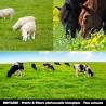 RENTABIO - Prairie & Pâture pluriannuelle biologique - Tous animaux