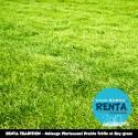 RENTA TRADITION - Mélange Pluriannuel Prairie/Pâture Trèfle et Ray-grass