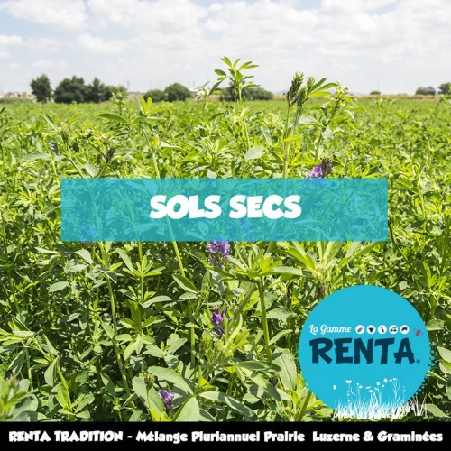 RENTA TRADITION - Mélange Pluriannuel Prairie 85% Luzerne et Graminées – Sols Secs