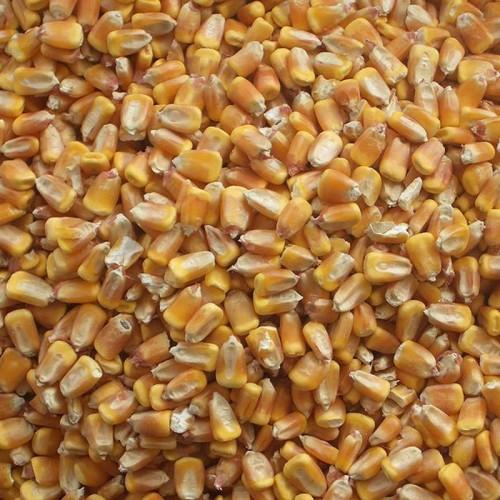 MAÏS en grains Bio - Origine C.E.E