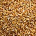 MAÏS grains Bio - Import Hors CEE