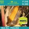 PRALINIA - Semence de maïs biologique* - FAO 210/240