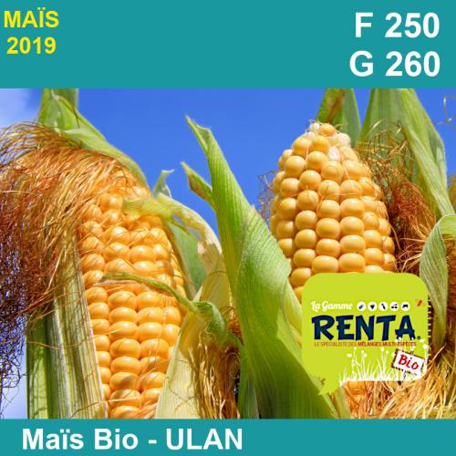 ULAN - Semence de maïs biologique
