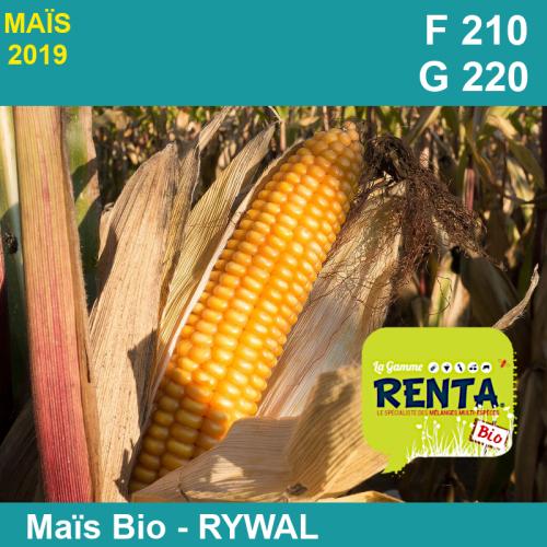 RYWAL - Semence de maïs biologique