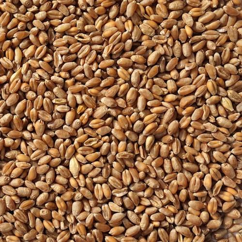 BLÉ FOURRAGER C2 UAB en Grains - Origine Allemagne - C.E.E