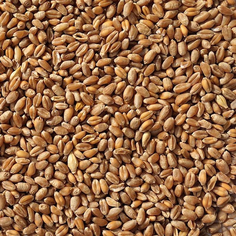 BLÉ FOURRAGER en grains C2 - Origine C.E.E